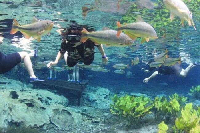 Flutuação em Bonito: Aquário Natural