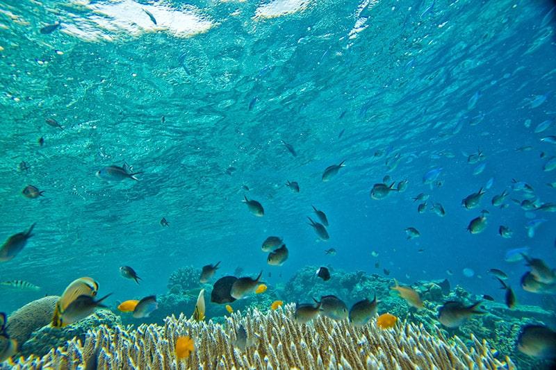Mergulho com peixes na Península de Maraú